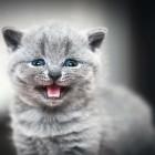 Антивандальная ткань от кошек, или антикоготь: какую выбрать для защиты мебели и на что обратить внимание при покупке