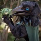 Мастер-класс по изготовлению костюма ворона и вороны из маски, накидки и перьев
